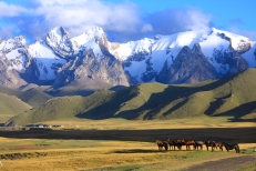 Kyrgyzstan Moutains and Horses